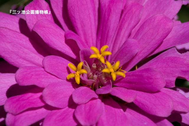 0030_1星三つ(ジニア).jpg
