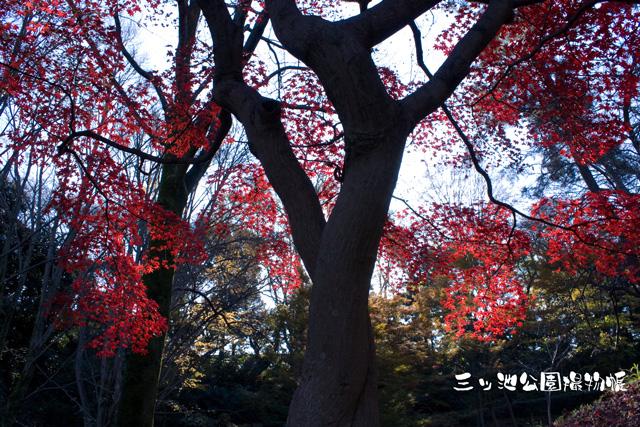 0106-1_花火.jpg