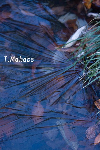 三ッ池公園の池の氷