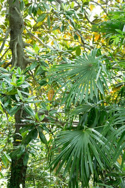 三ッ池公園の常緑樹.jpg