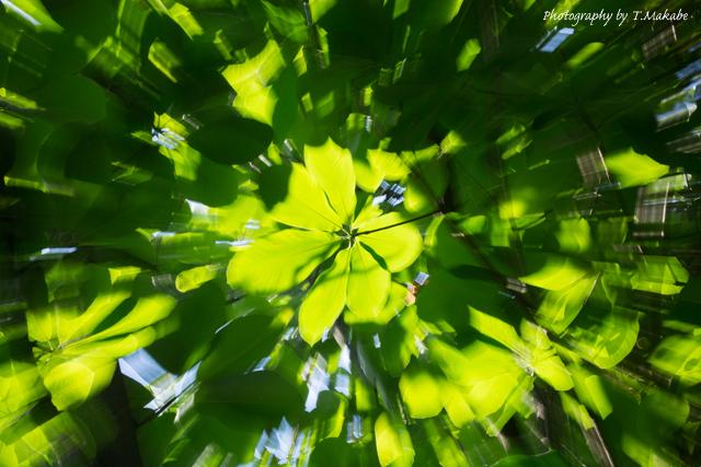 三ッ池公園の新緑.jpg