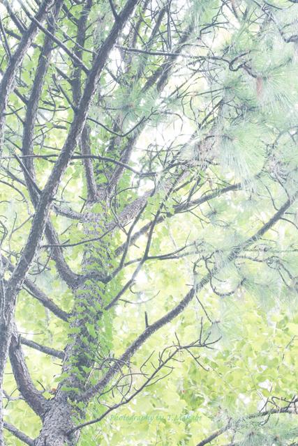 三ッ池公園の樹木.jpg