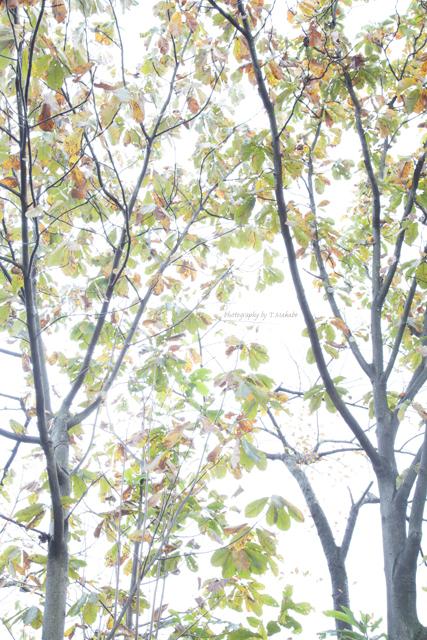 三ッ池公園の紅葉.jpg