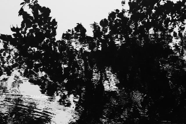 三ッ池公園の池の水面.JPG