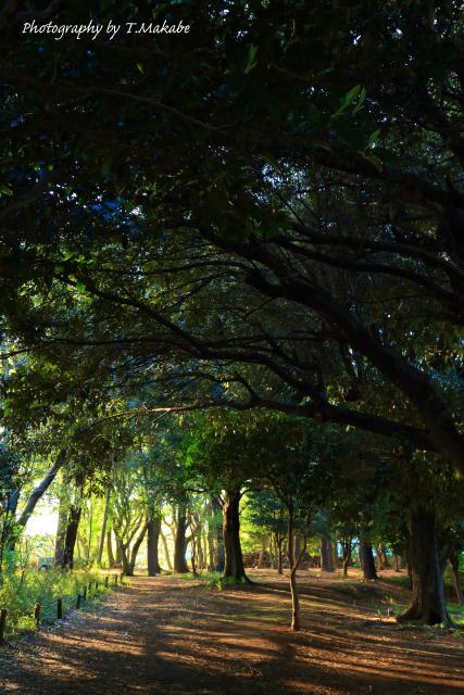 1672-1★三ッ池公園林の夜明け.JPG
