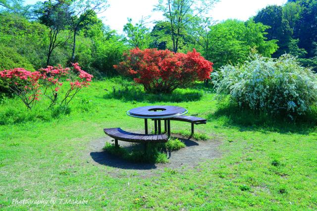 1676★三ッ池公園の花の広場キリシマツツジ.JPG