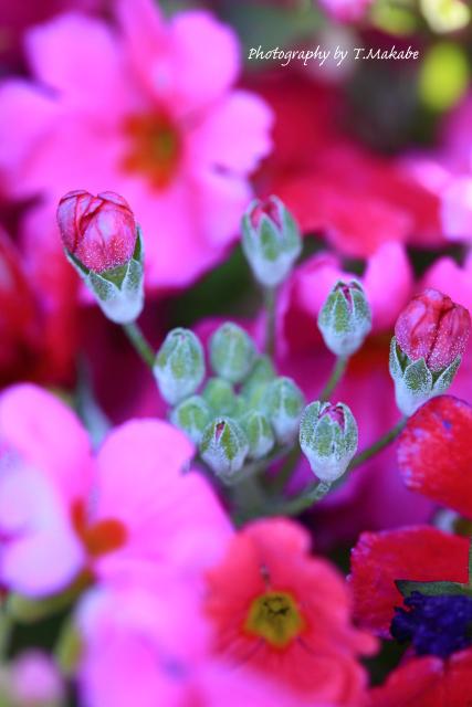 1770-1★三ッ池公園プランターの花.JPG
