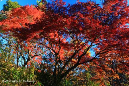 1889-1★三ッ池公園の紅葉.JPG