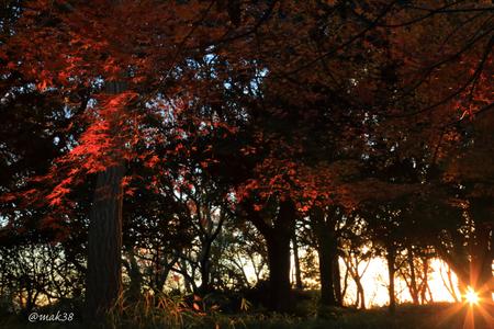 2064-1★三ツ池公園カエデの紅葉.JPG